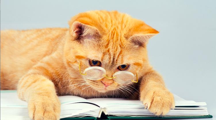 Curiosidades de la publicación de libros: Gatos y Literatura