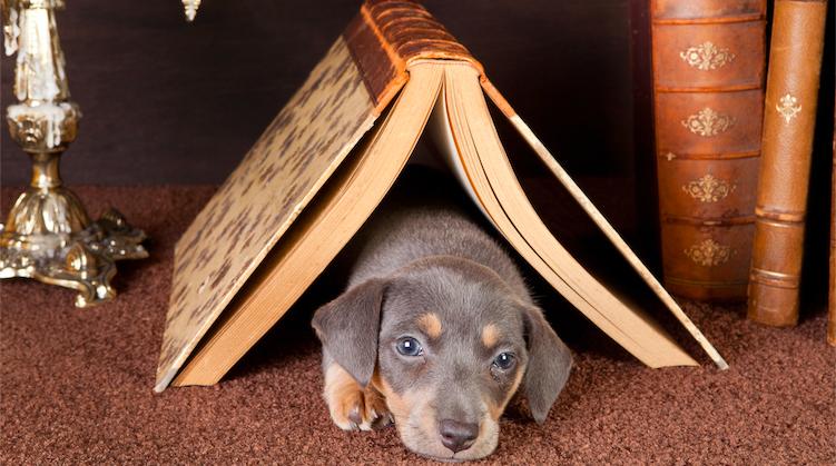 Escritores y perros